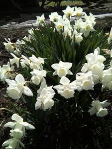 季節の花々 春